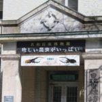 岐阜の名和昆虫博物館には珍しい昆虫がいっぱい!見るのに勇気がいる虫も?