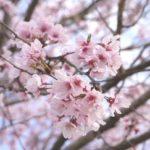 【パパママ必見】家族で花見をする差に持っていくと便利なアイテム一覧!