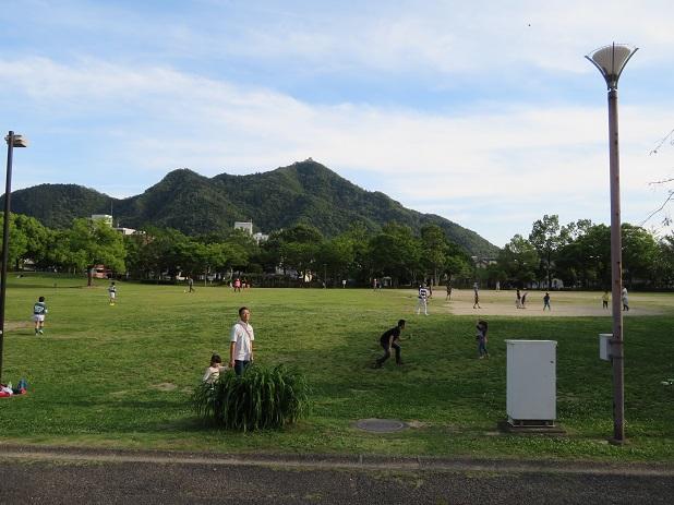 南側の芝生