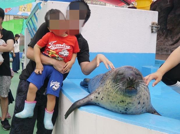 海獣とのふれあい