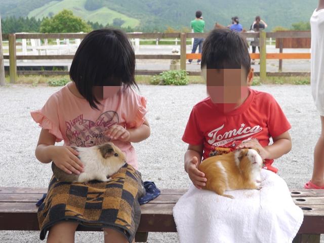 富士山こどもの国 モルモット