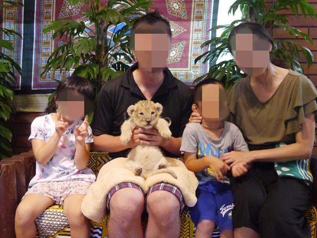 富士サファリパーク赤ちゃんライオンふれあい撮影会